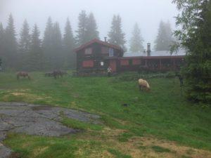 Det var relativt høy luftfuktighet og temperaturen var en tidlig høst verdig, men det satte vel egentlig hestene pris på. Foto: Elisabet Haveraaen