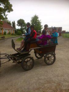 Hest og vogn var en attraktiv aktivitet. Hestene synes også det er stas å gå foran vogna. Foto: Heidi J Andersen