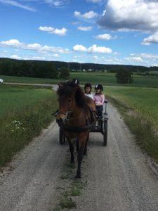 Mesteparten av undervisningen foregikk på banen, men det ble også et par turer med hest og vogn. Her er det Litla-Gydja fra Skog som ligger i selen. Foto: Line Skofteby